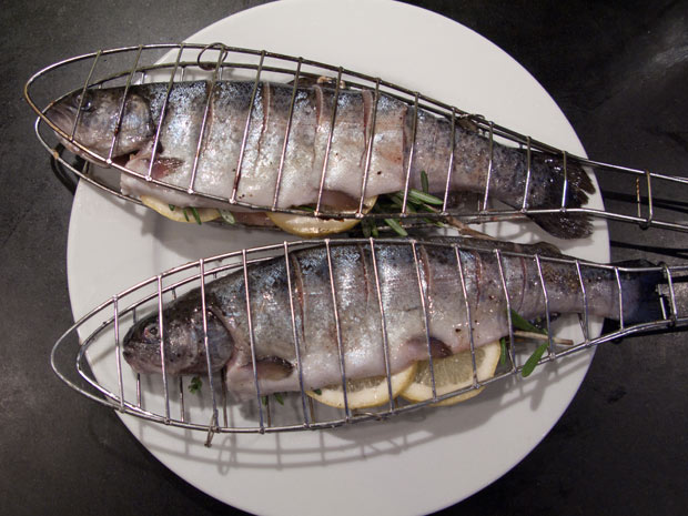 forel-in-visklem