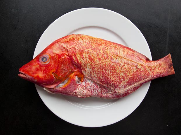verse-Red-Snapper